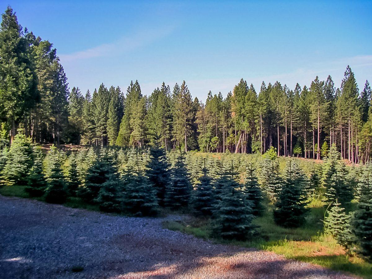 The Guthrie Christmas Tree Farm and Holiday Wreaths