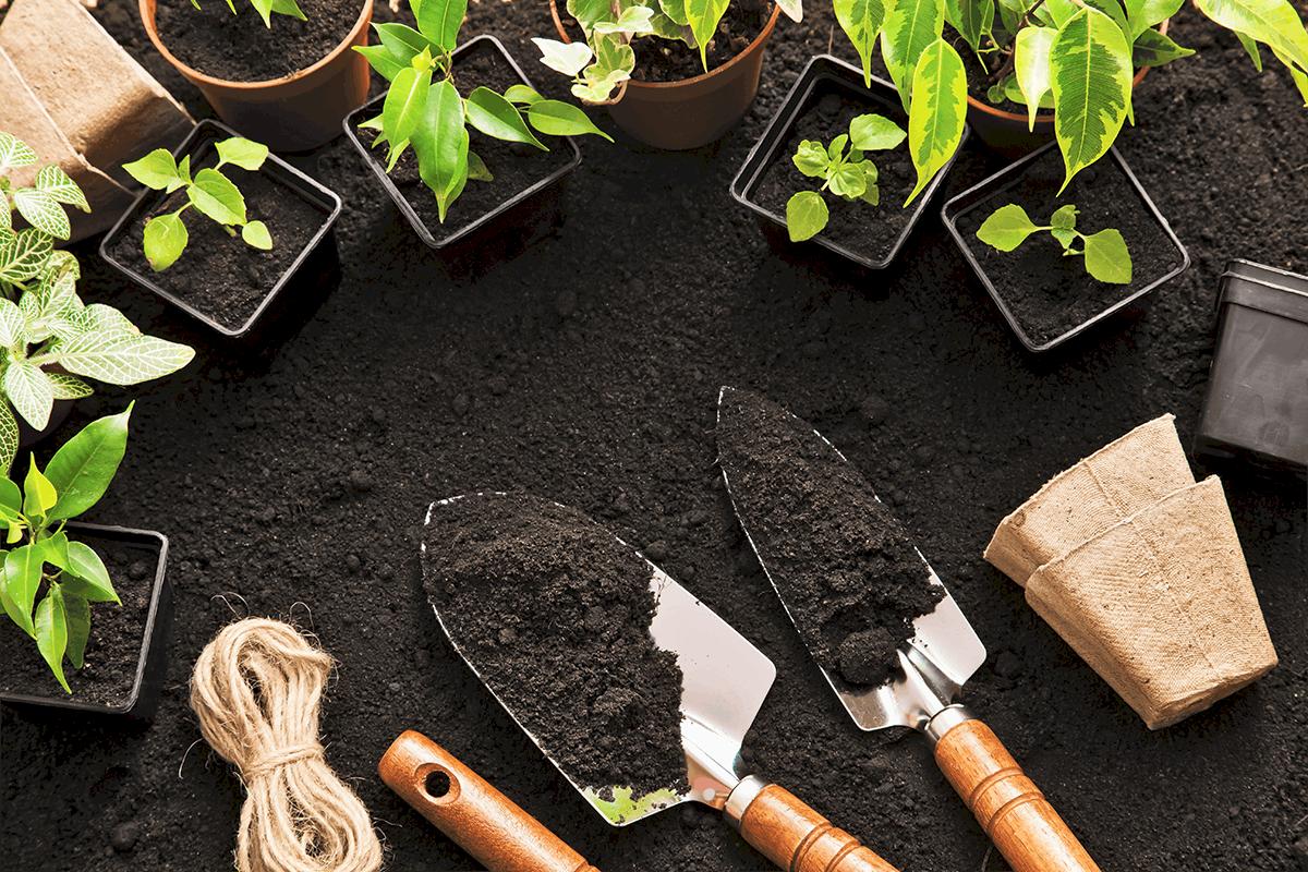 3 Winter Gardening Tips for a Beautiful Spring Yard