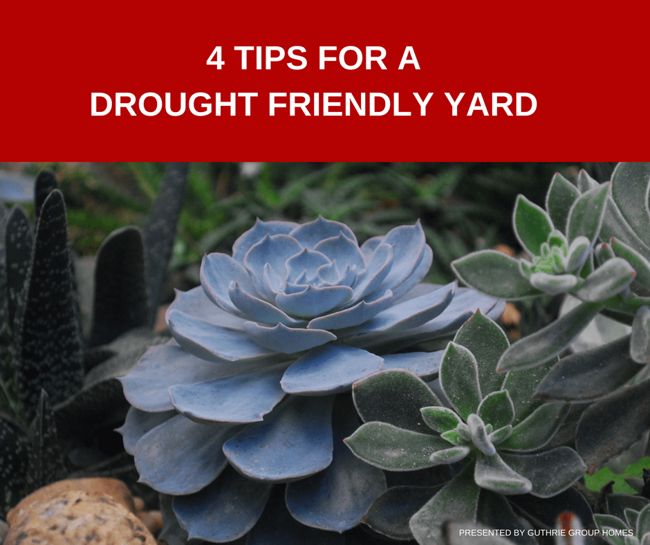Photo of a succulent representing drought tolerant plants