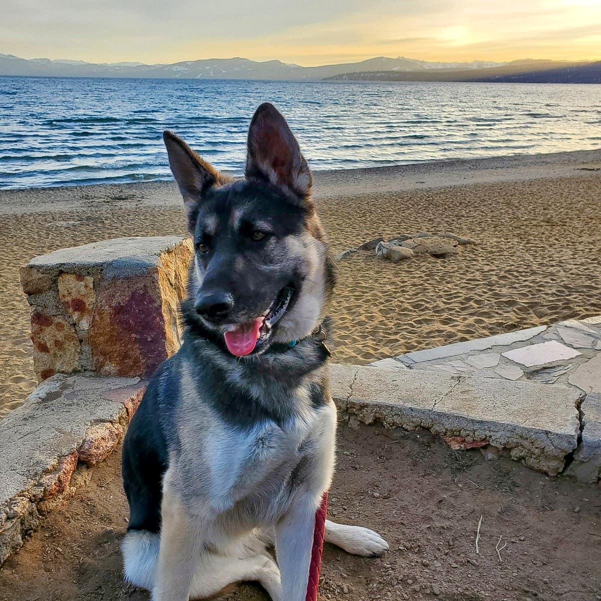 Kota the Rescue Dog