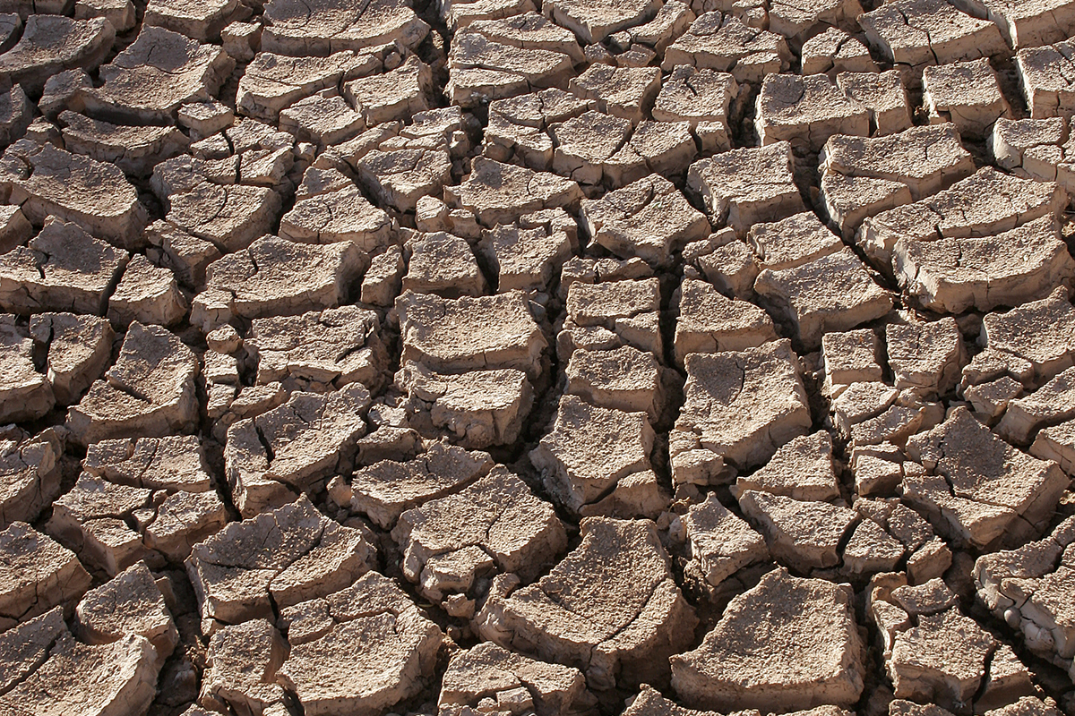 Articles about the dealing with the Drought in California
